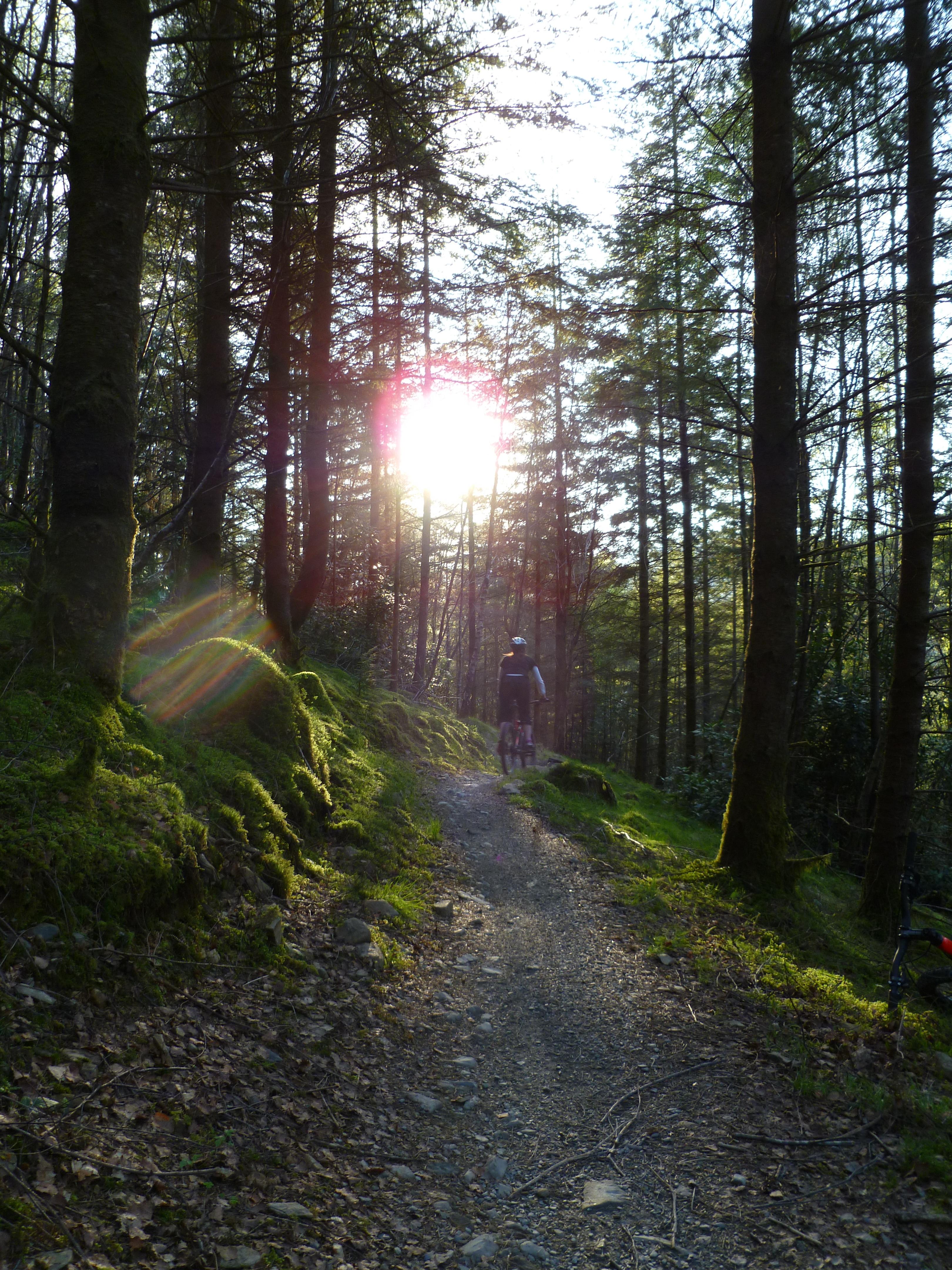 The sun shining at Coed y Brenin